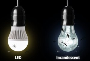LED-insect-attaction How To Keep a LED Lamp IP65?