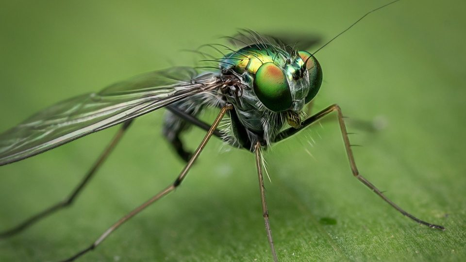 Close up of fly