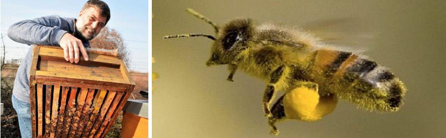 Biene, Umweltschützer