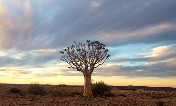 Botswana Nambie SEZANE SEZALORY