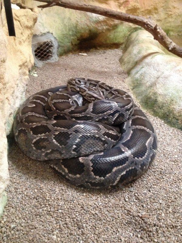 Serpent arche animalière
