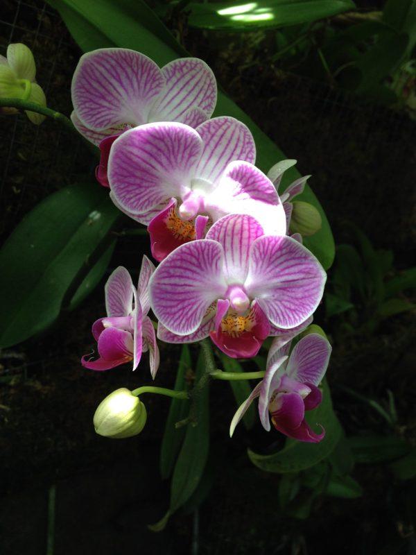 Fleurs Terra Botanica