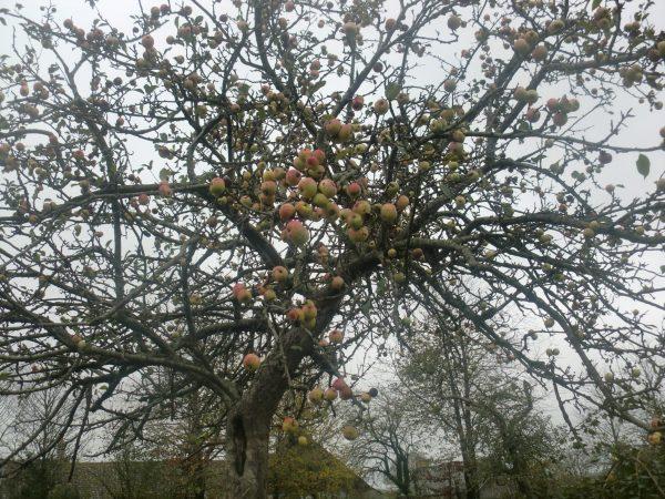 Pommiers Mayenne