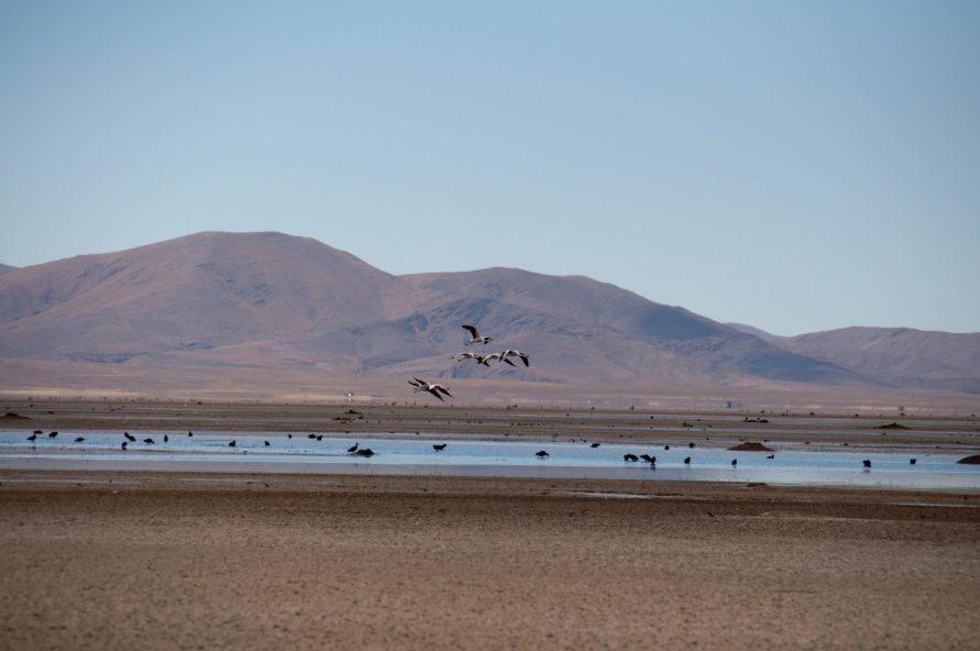 Lagunas de los Pozuelos Argentine