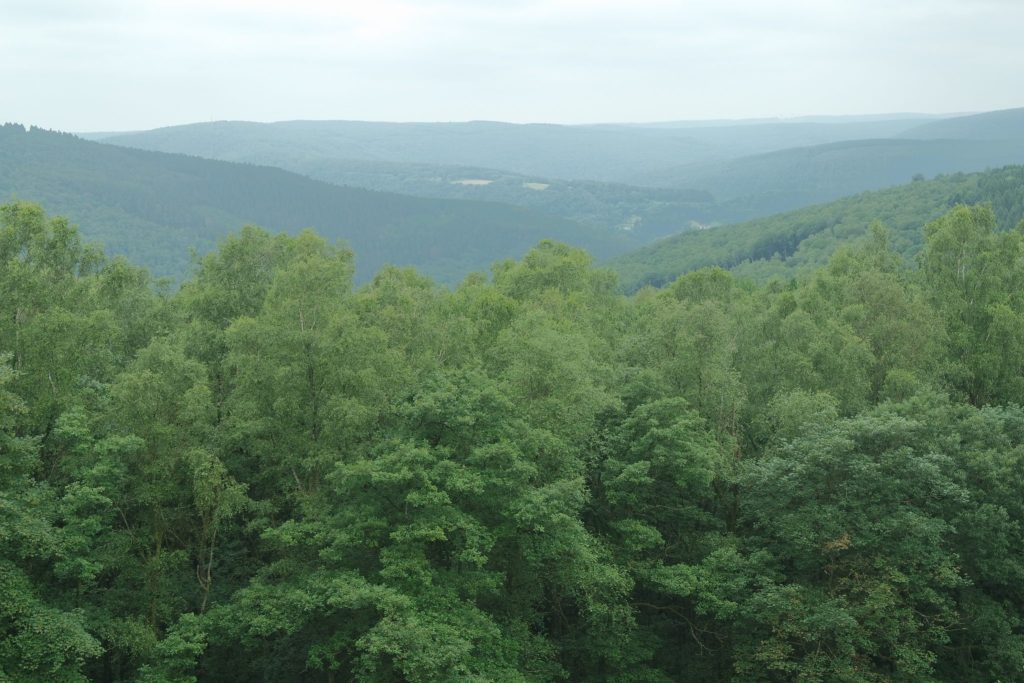 Paysages Ardennes