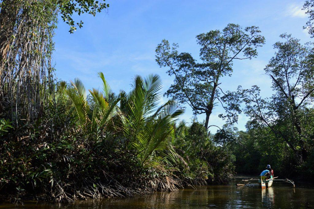 Palawan Mangrove
