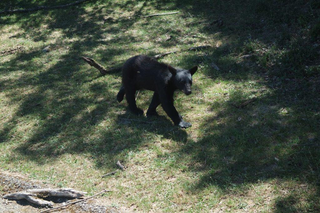 Activités insolites d'Ardèche zoo de Peaugres