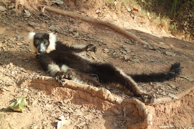 Lemur's Park Tana