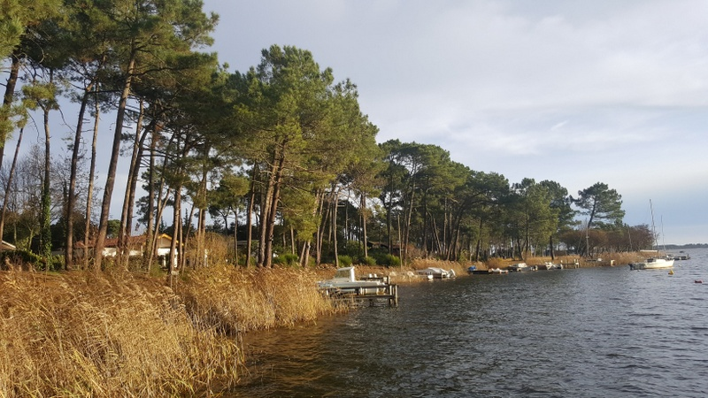 Rives Lac Lacanau