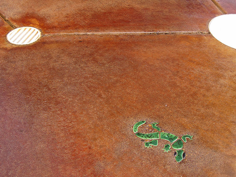 closeup of lizard embedded in acid stained pool deck