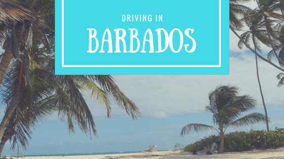Renting a car in Barbados is the best way to explore off the beaten track! Even if you haven't driven on the left-side of the road before, not to worry.