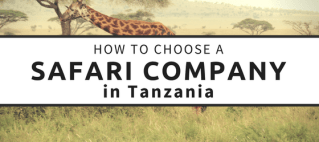 If you are planning a safari in Tanzania, a quick Google search will surely leave you feeling overwhelmed. Researching and deciding on companies was very time-consuming so I'm sharing my top tips on how to book a safari to save you some time!