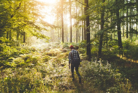 Image result for people walking through the woods