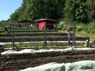 Seattle University sustainable agriculture students at Seattle Community Farm