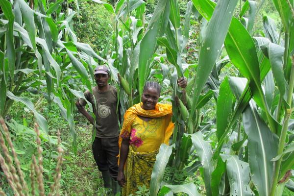 Tanzania-Feld