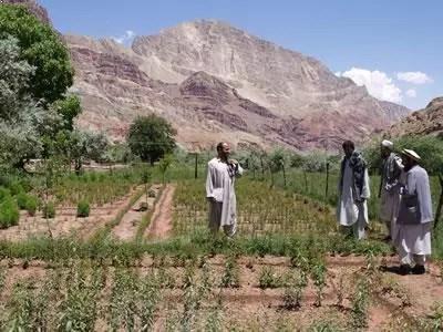 afghanistan pepinieres bamyan