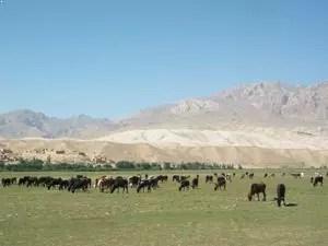 pâturages Afghanistan bamyan
