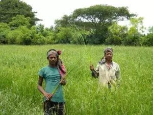 bangladesh agriculture