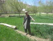 afghanistan champ blé