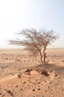 Région de North Horr, Kenya