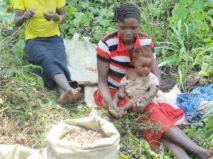 Sudan Sudan woman working in field with children