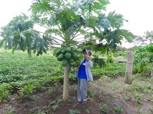 Sr Rosa attending to papaya tree in South Sudan