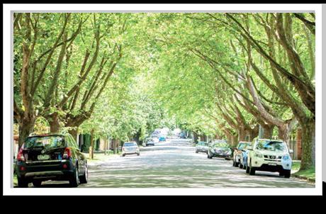 gascoigne-trees