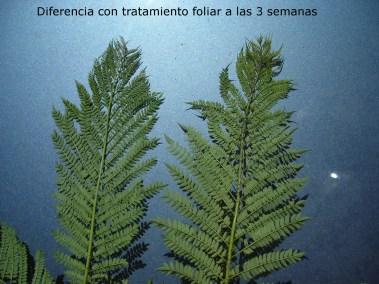 dif endoterapia-foliar a 3 sem