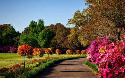 Se acerca el momento de la flor de invierno en tu jardín