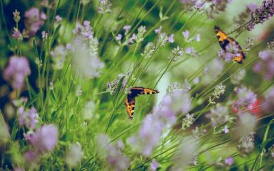 Sol i Vent Paisatges: 25 años de evolución jardinera