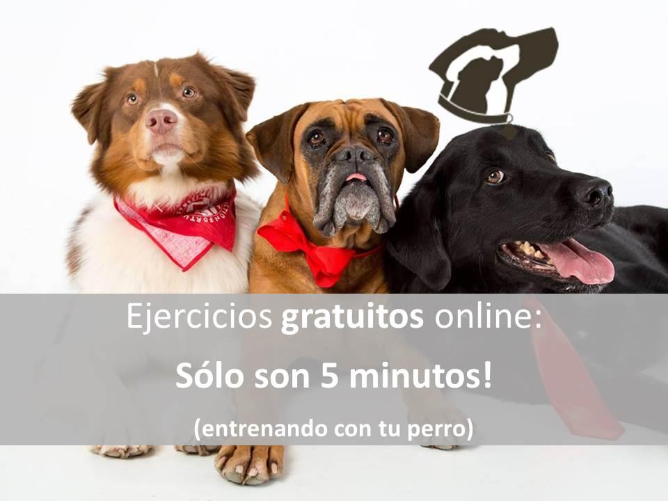 Ejercicios gratuitos online: Sólo son 5 minutos!