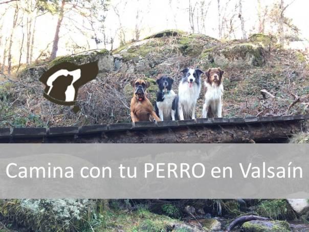Camina con tu perro