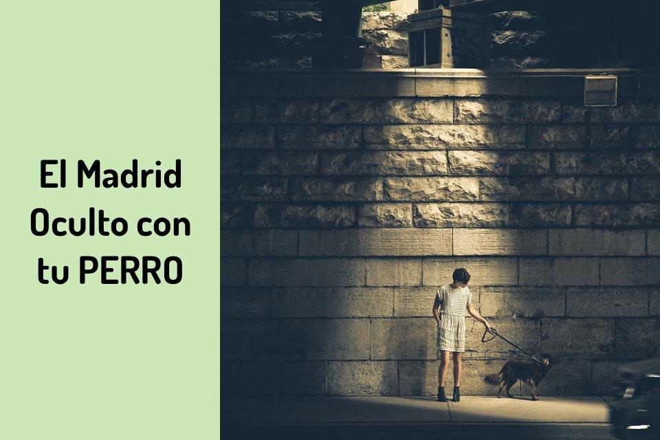 Presume de Perro Educado en Madrid