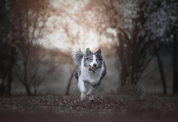 educacion canina material