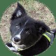 Cachorro de uno de los alumnos del curso