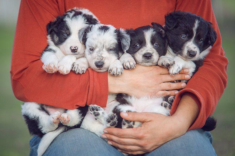 Cachorros esperando ser elegidos