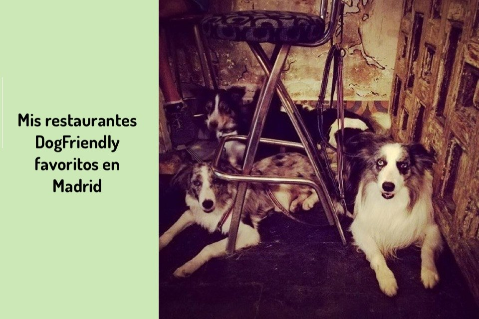 restaurante-favoritos-dogfriendly-madrid-centro