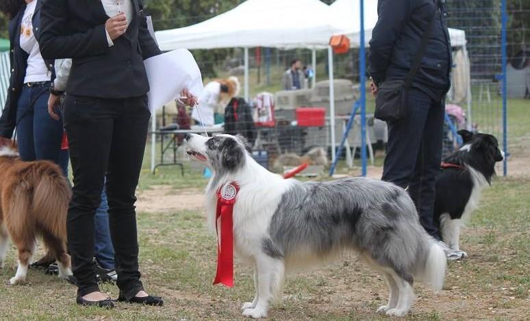 Introducción a las Exposiciones caninas