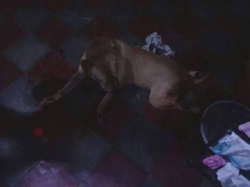 Agente de la PNC dispara a un perro dentro de una casa en Mejicanos