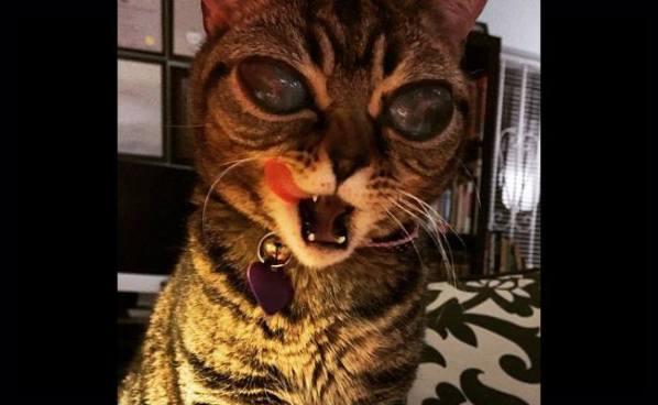 "Matilda, la gata ""extraterrestre"" que conmocionó al mundo"