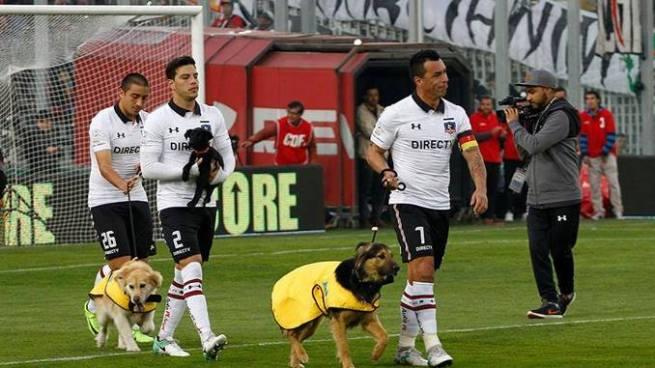Jugadores de fútbol saltan al campo con perros que buscan de ser adoptados