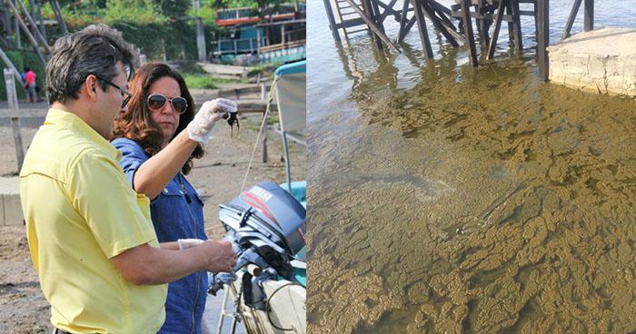 MARN identifican cianobacteria en el lago de Coatepeque en Santa Ana