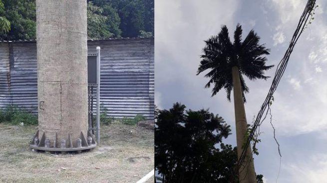 Programa de TV mexicano hace burla a la 'antena palmera' ubicada en Antiguo Cuscatlán