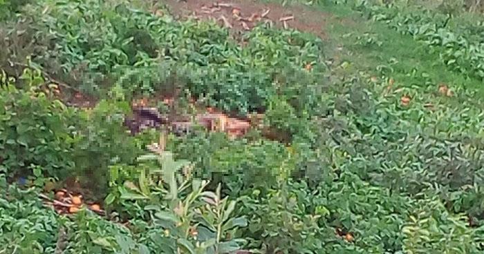 Localizan el cadáver calcinado de una mujer en el municipio de San Martín