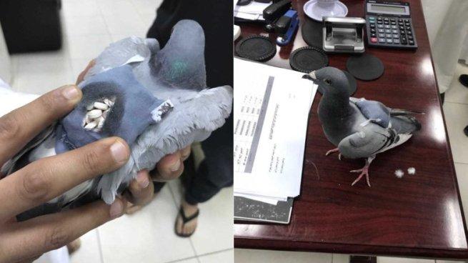 Capturan a paloma mensajera que transportaba 178 píldoras de droga