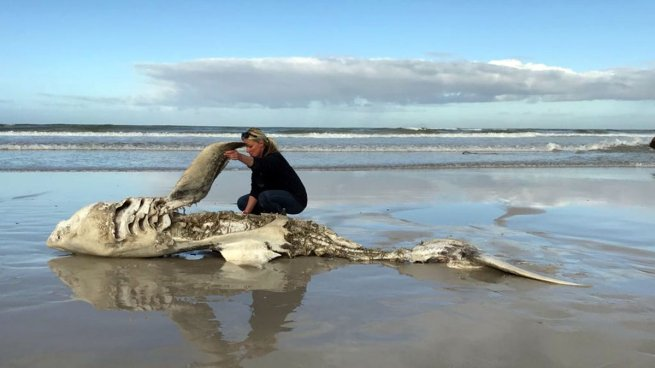 Alarma por la aparición de enormes tiburones desmembrados en las costas de Sudáfrica