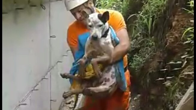 """Bomberos rescatan a """"Snoopy"""" un perro que paso toda una noche atrapado entre lodo"""