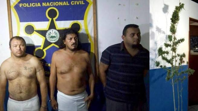 PNC de San Miguel detiene a varios sujetos y decomisa una planta de marihuana