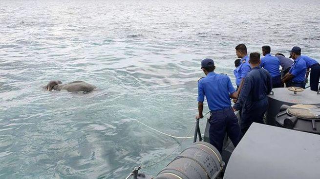 Video: Rescatan a un elefante antes de que se ahogara en alta mar