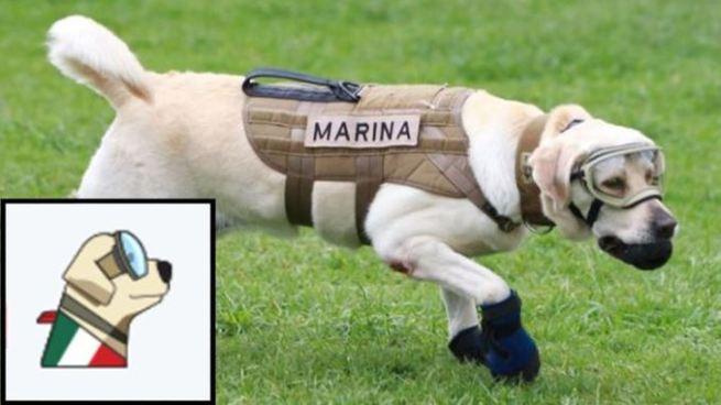 Twitter crea emoji de Frida como homenaje a los caninos rescatistas